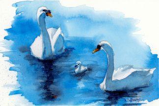 Swans Three