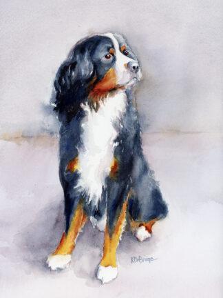 Bernese Mountain Dog Watercolor